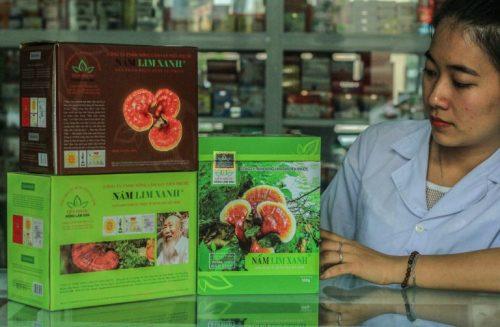 Nấm lim xanh Tiên Phước Quảng Nam hỗ trợ điều trị cao huyết áp hiệu quả.