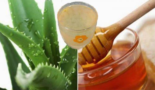 Bài thuốc phòng chống ung thư từ nha đam và mật ong