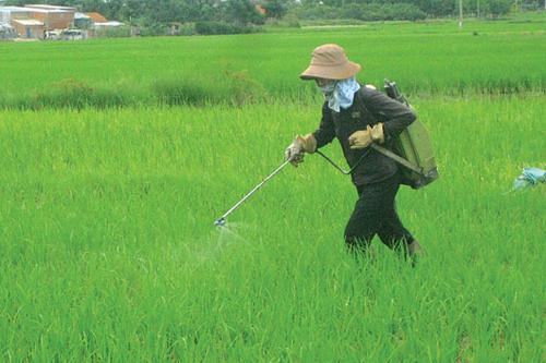 việc sử dụng thuốc trừ sâu là một phần nguyên nhân gây bệnh