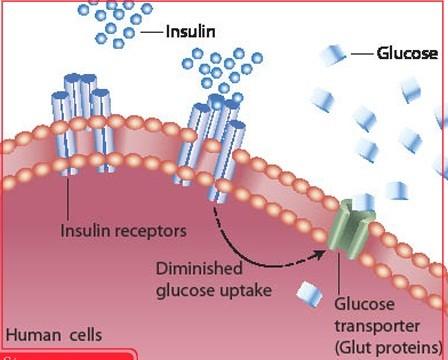 Tiểu đường là căn bệnh phổ biến hiện nay