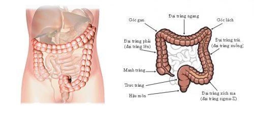 Bài tập cho bệnh nhân ung thư đại trực tràng