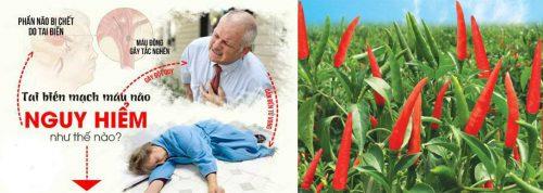 Cách giảm nguy cơ đột quỵ bằng lá ớt chỉ thiên