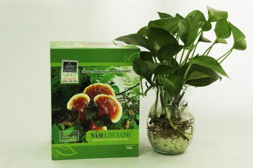 Công dụng nấm lim rừng được chứng minh giúp ngăn ngừa và hỗ trợ điều trị bệnh ung thư dương vật.