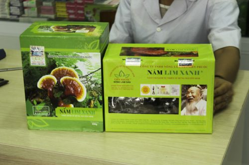 Nên sử dụng loại nấm lim rừng đã qua chế biến để hỗ trợ điều trị bệnh ung thư.