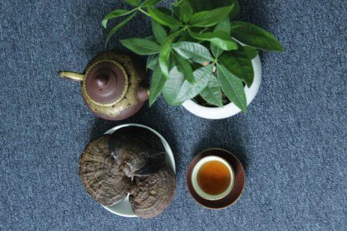 Công dụng của nấm liêm xanh rừng là giải độc cơ thể