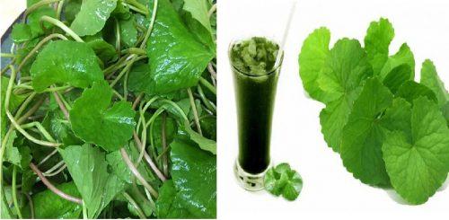 Cách dùng rau má giải độc gan trị mụn
