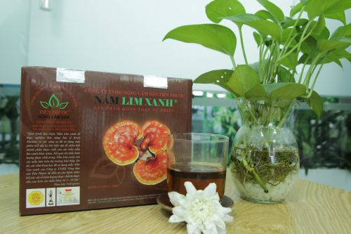 Giá nấm lim xanh rừng Tiên Phước loại nguyên cây là thấp nhất