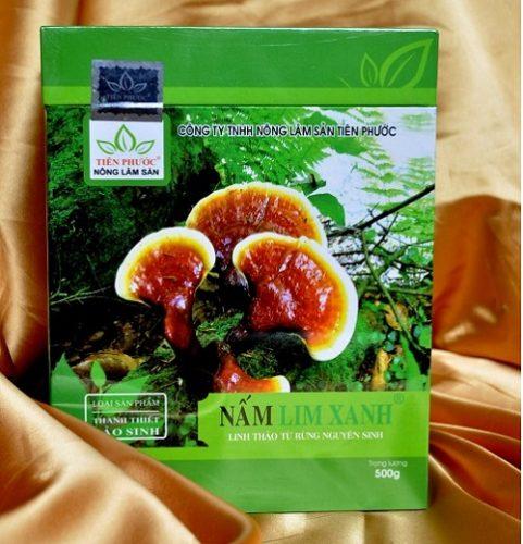 Nấm lim xanh chữa bệnh viêm gan nhờ những dược tính quý.