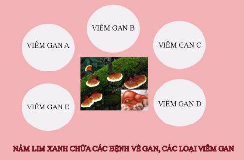 Các loại viêm gan đều có thể dùng nấm lim xanh để chữa và ngăn ngừa bệnh.