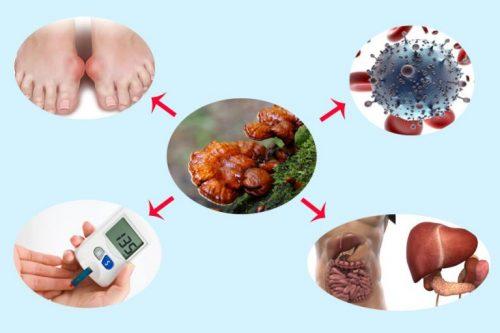 Công dụng nấm lim xanh Quảng Nam là chữa các bệnh ung thư, gout, gan...