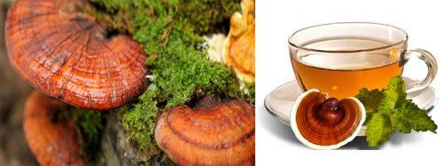 Công dụng của nấm lim rừng tự nhiên được chứng minh qua nhiều công trình nghiên cứu.