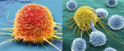 Sự hình thành tế bào ung thư