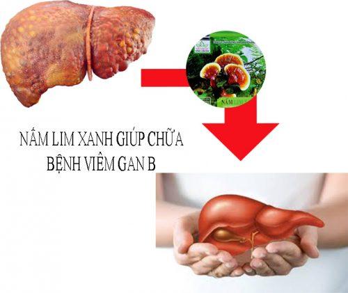 Nấm lim xanh rừng chữa viêm gan b nhờ các thành phần dược tính quý trong nấm.