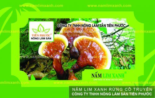 Sản phẩm nấm lim xanh được bán trong các đại lý ủy quyền tại Quảng Ngãi.