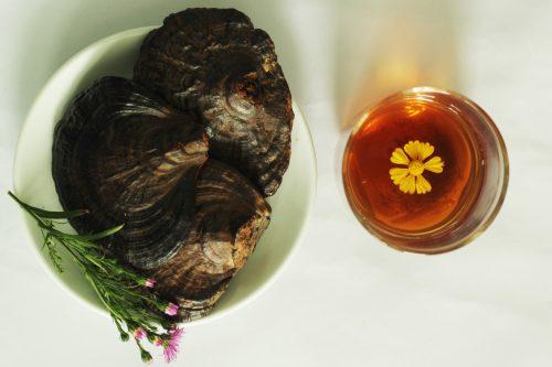 Cách dùng nấm lim xanh rừng Tiên Phước là sắc nước uống.