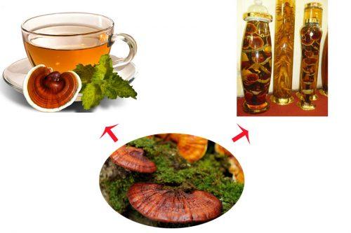 Ngâm rượu, sắc nước là hai cách chế biến nấm lim xanh rừng tự nhiên thường dùng.