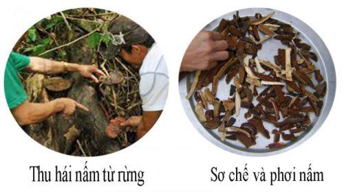 Cách chế biến nấm lim xanh rừng tự nhiên để loại bỏ tạp chất và độc tố.