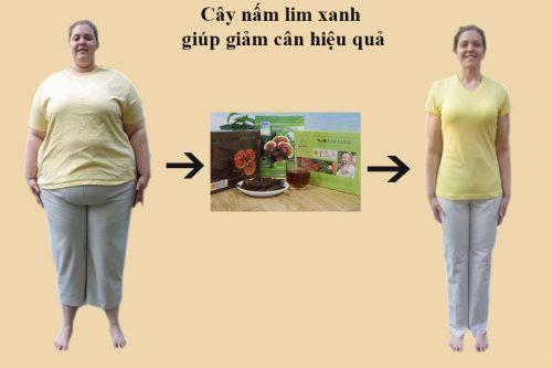 Nấm linh xanh giúp giảm cân hiệu quả