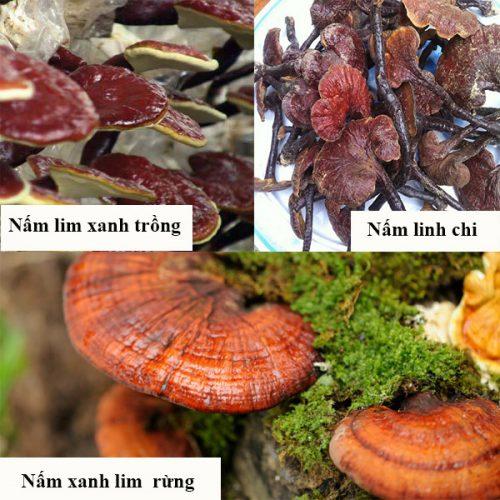 Nấm lim xanh rừng thường bị làm giả từ nấm lim trồng, nấm linh chi.
