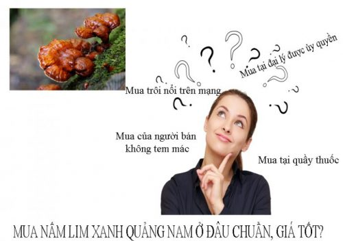 Mua nấm lim xanh Quảng Nam ở đâu chuẩn cho người tiêu dùng.