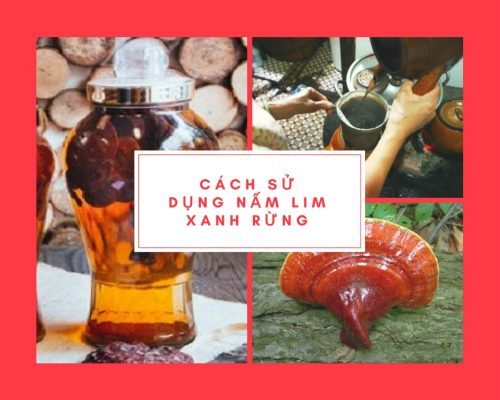 Cách sử dụng nấm lim xanh rừng tự nhiên Quảng Nam