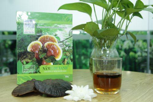 Nấm lim xanh rừng tự nhiên của Công ty TNHH Nông lâm sản Tiên Phước