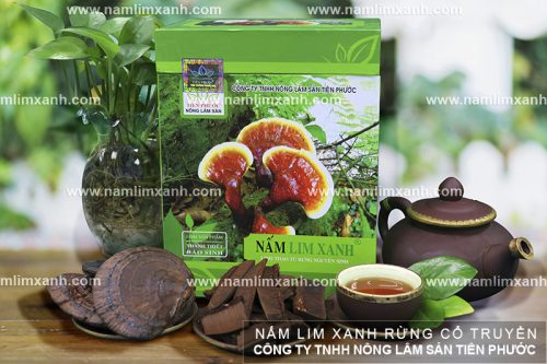 Tác dụng của nấm lim xanh rừng Tiên Phước Quảng Nam