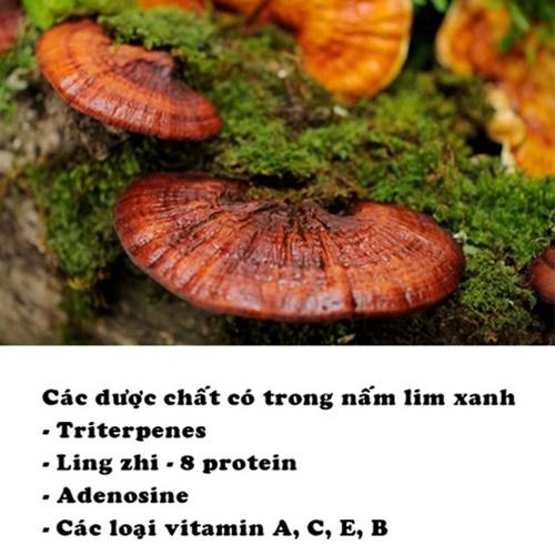 Tác dụng chữa bệnh của nấm lim xanh rừng được làm nên từ những dược chất quý hiếm