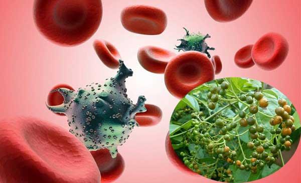 Cách sử dụng xạ đen để điều trị bệnh ung thư