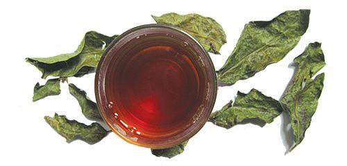Uống nước cây xạ đen hỗ trợ điều trị ung thư hiệu quả