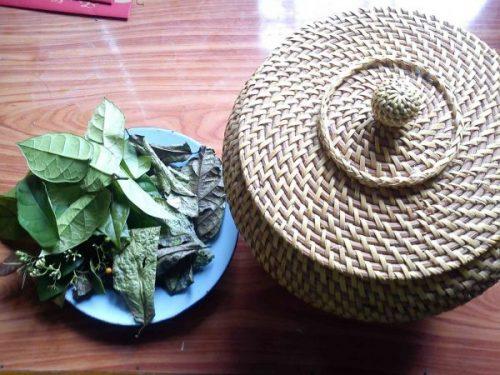 Từ xa xưa, người Mường đã sử dụng lá cây xạ đen để chữa bệnh