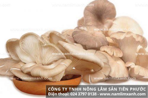 Nấm bào ngư có công dụng gì và thành phần dinh dưỡng trong nấm.