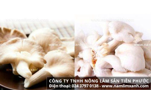 Cộng dụng nấm ngọc thạch phòng chống ung thư và tác dụng chữa bệnh khác