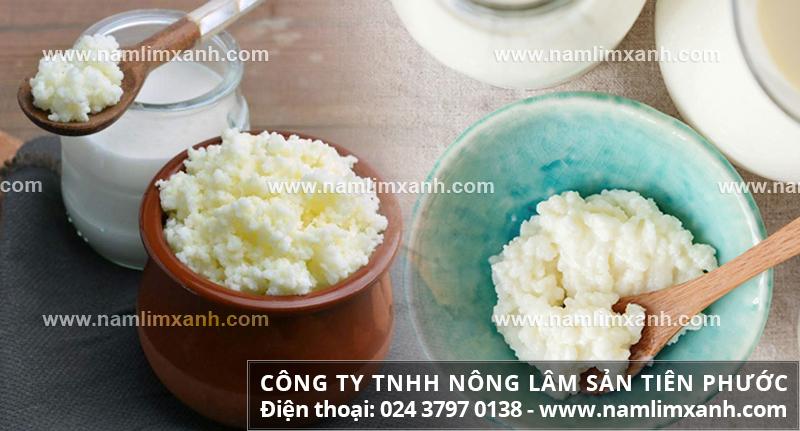 Cách sử dụng nấm từ nấm sữa và cách uống nấm sữa như thế nào hiệu quả?