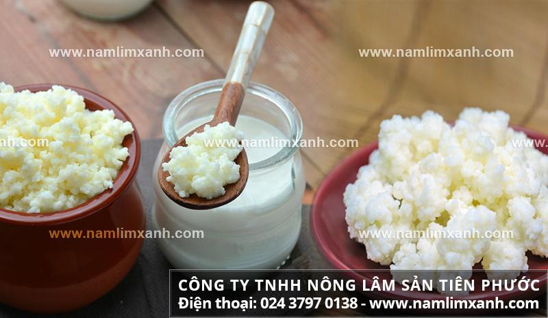 Công dụng của nấm sữa hỗ trợ trị bệnh tiểu đường, yếu gan và ung thư