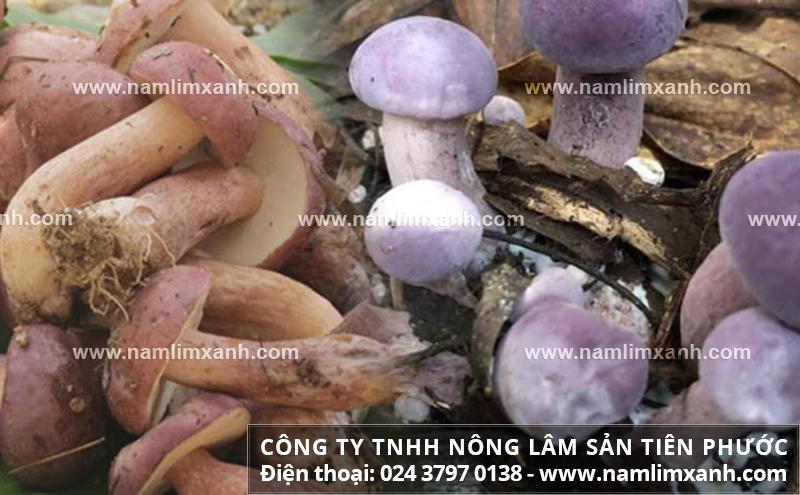 Giá nấm tràm bao nhiêu 1kg và giá mua bán nấm tràm trên thị trường