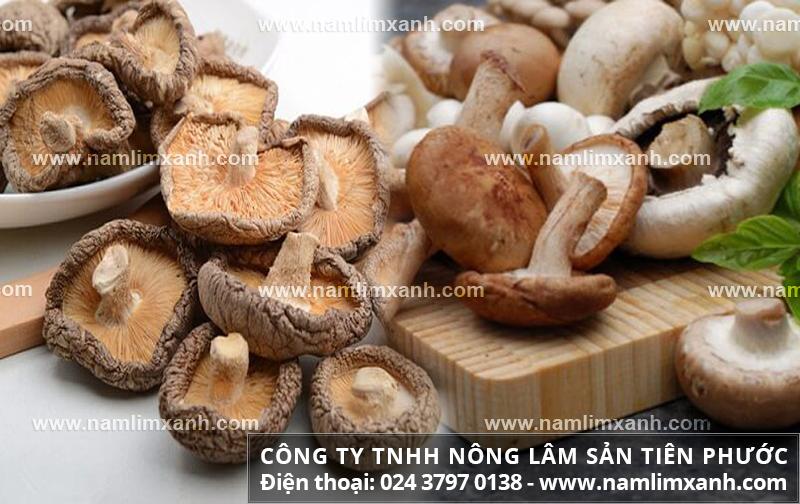 Nấm hương là gì và tác dụng với cách dùng nấm hương ngon bổ nhất
