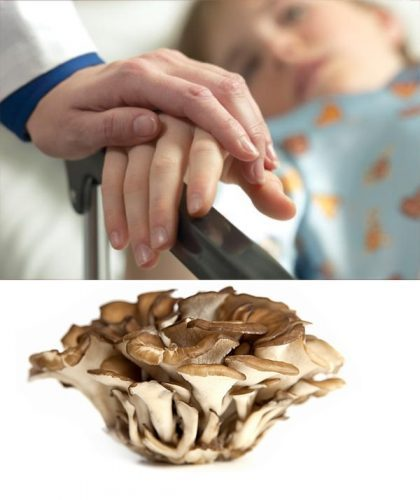 Công dụng của nấm Maitake trong phòng ngừa và hỗ trợ điều trị ung thư