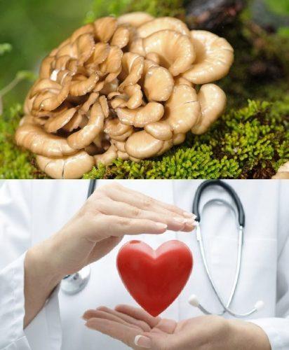 Công dụng của nấm Maitake trong điều trị bệnh tim mạch