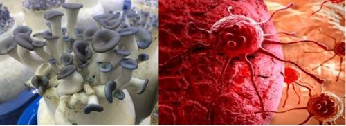 Công dụng của nấm yến trong chữa bệnh ung thư