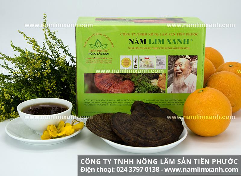 Nấm lim xanh Tiên Phước loại nguyên cây với các công dụng giá trị cho sức khỏe.