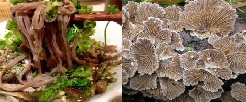 Các món ăn từ nấm chân chim và cách làm nấm chân chim đúng