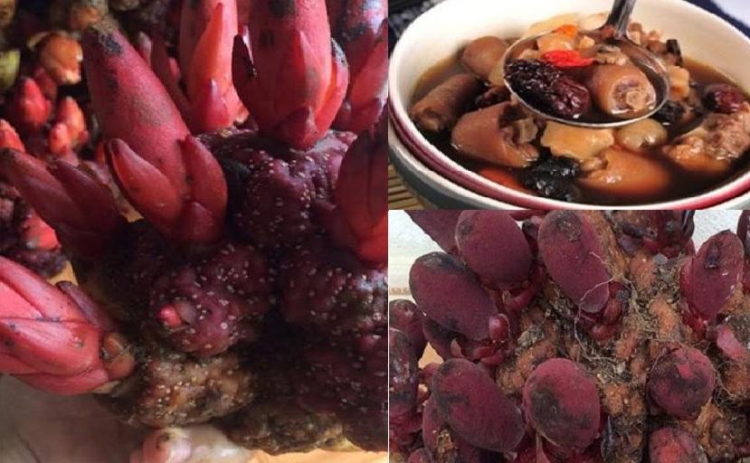 Các món ăn từ nấm ngọc cẩu và cách sử dụng nấm ngọc cẩu phát huy tác dụng