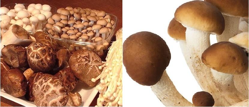 Cách bảo quản nấm trân châu tươi và nấm trân châu khô hiệu quả