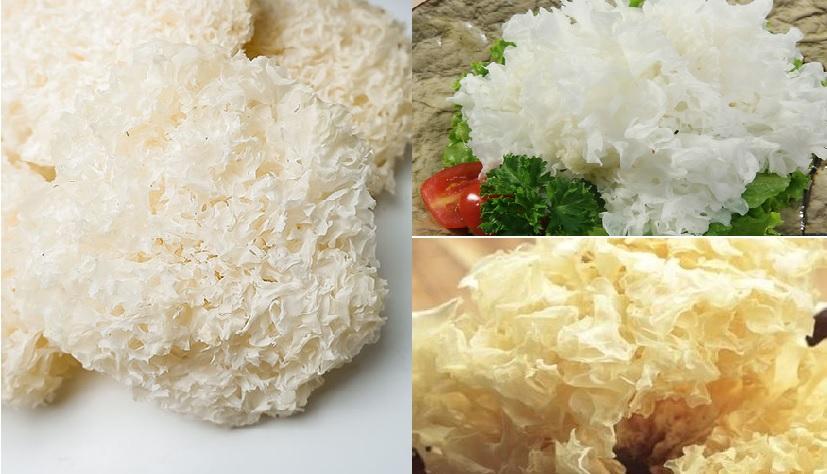 Cách dùng nấm tuyết với cách sơ chế và cách làm nấm tuyết trị bệnh