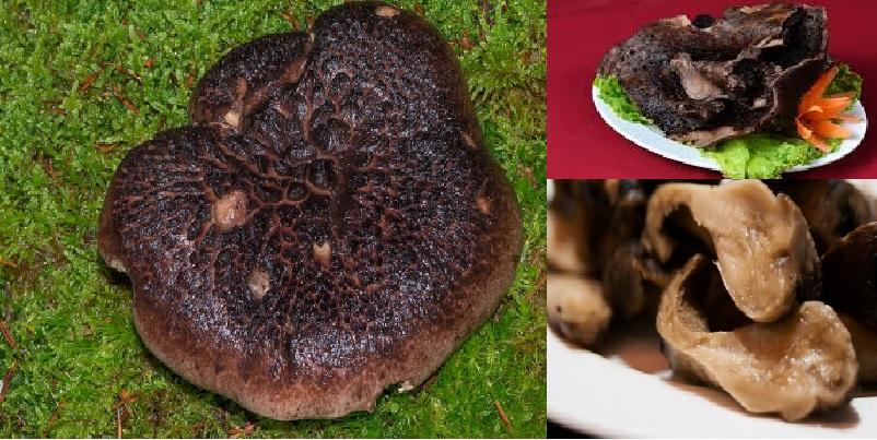 Cách làm các món ăn từ nấm vuốt hổ đen và chế biến nấm vuốt hổ đen
