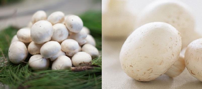 Cách nhận biết nấm mỡ thật giả và giá bán các loại nấm mỡ