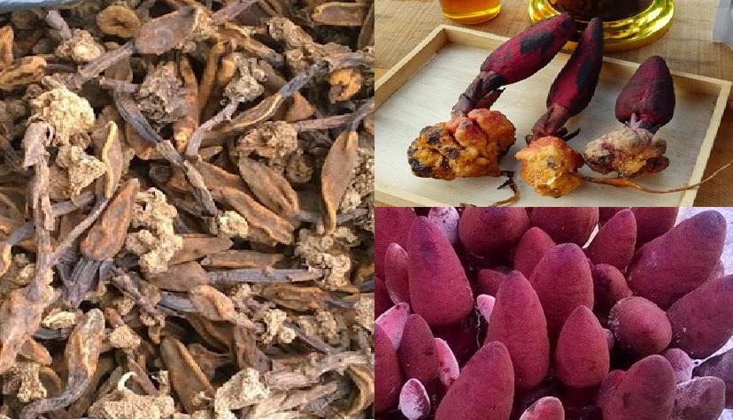 Cách sơ chế nấm ngọc cẩu đúng đảm bảo tác dụng nấm toả dương ra sao?