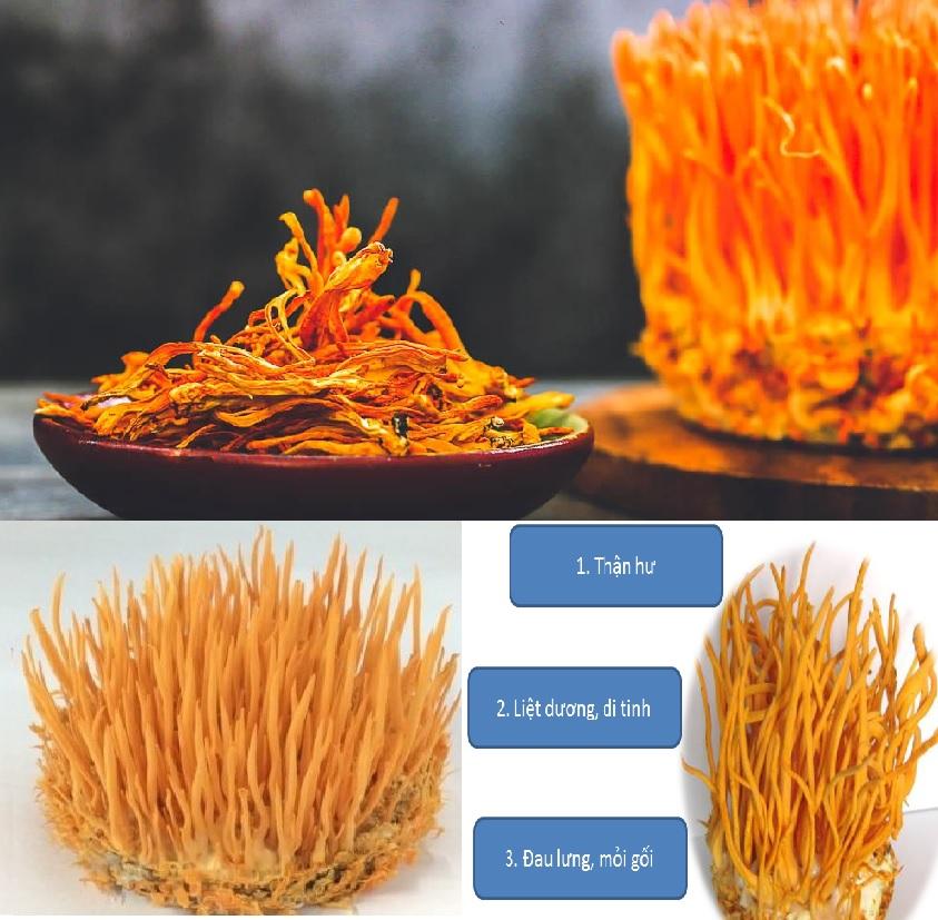 Cách sử dụng và cách nấu nấm đông trùng hạ thảo chữa bệnh ra sao?