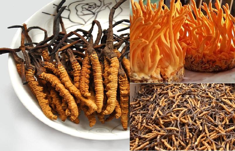 Giá các loại nấm đông trùng hạ thảo bao nhiêu tiền 1kg chính hãng?